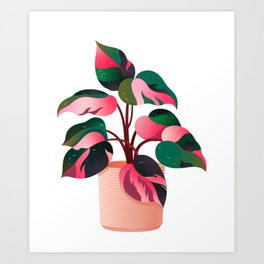 Philodendron Pink Princess PPP Aroid House Plant Lover Art Print