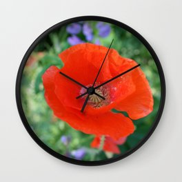 Red Poppy with Lupin by Mandy Ramsey, Haines, Alaska Wall Clock