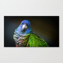 Amazona Versicolor Canvas Print
