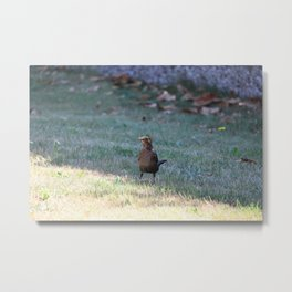 Small Bird Staying In The Shade Metal Print