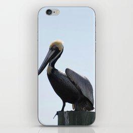 Pelican Face. iPhone Skin