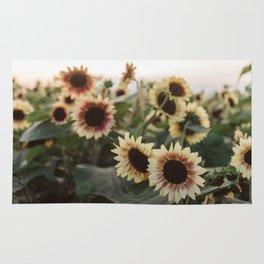 Sunflower fields at sunset Rug