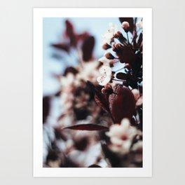 Soft Blossoms Art Print