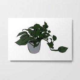 Devil's Ivy Metal Print