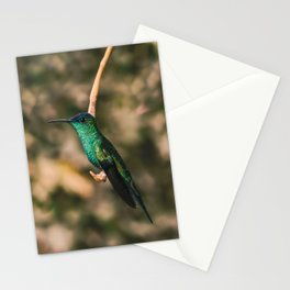 Hummigbird Thalurania Glaucopis Trochilidae Stationery Cards