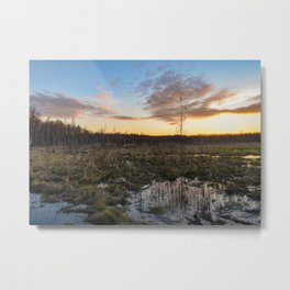 Sunset in the blue sky over the spring backwaters of a forest swamp Metal Print