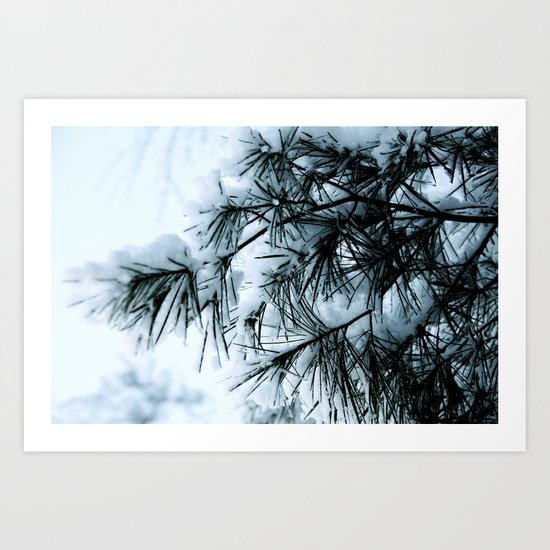 Snow Laden Pine - A Winter Image Art Print