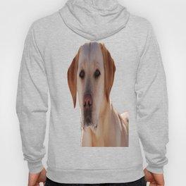 Portrait of A Golden Labrador Dog Hoody