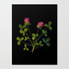 Mary Delany Botanical Vintage Flower Floral Collage Trifolium Pratense Canvas Print