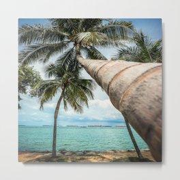 tropical palm  Metal Print