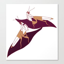 Orchid Mantids Canvas Print