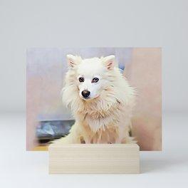 American Eskimo Dog Mini Art Print