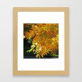 Fallbeauty/Golden Foliage Framed Art Print