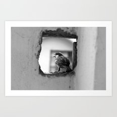 a sparrow Art Print