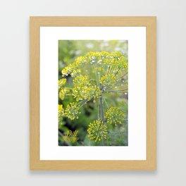 Dill in the garden I Framed Art Print