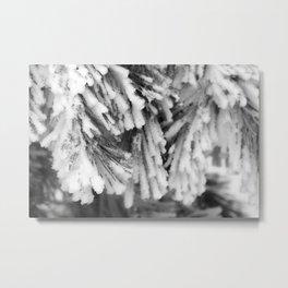 Winter's Pine 12 Metal Print