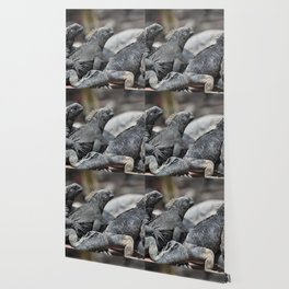 Three marine iguanas hanging out together Wallpaper