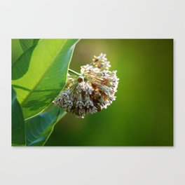 Out of the Green, in Bloom Canvas Print