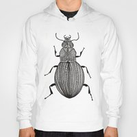 beetle Hoodies featuring Beetle  by Lucia Cordero
