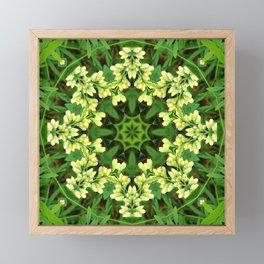 Cream and green botanical mandala - Baptisia flowers 1 Framed Mini Art Print