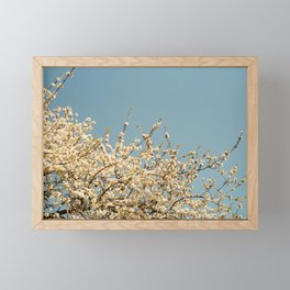 Pear Tree (One) Framed Mini Art Print