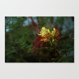 spidery red Canvas Print