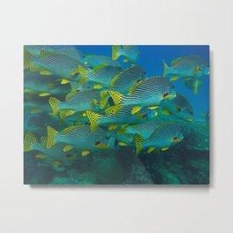 At the bottom of the sea. Metal Print