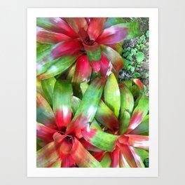 Bromeliad Beauties Art Print