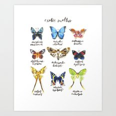 Exotic Moths Art Print
