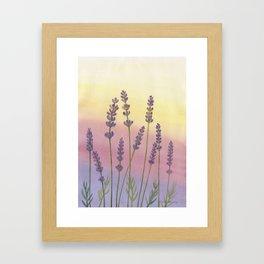 Lavender in Sunset Framed Art Print