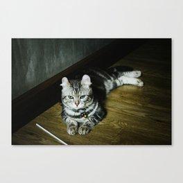 Unamused Canvas Print