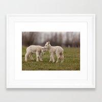 lamb Framed Art Prints featuring lamb by Marcel Derweduwen