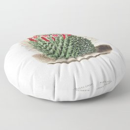 Pincushion Cactus (Mammillaria Dolichocentra) from Iconographie descriptive des cactees by Charles A Floor Pillow