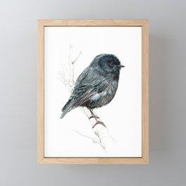 Black Robin Framed Mini Art Print