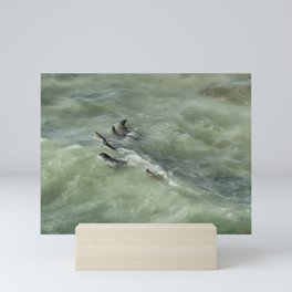Sea Lions Cavorting in a Green Sea Mini Art Print