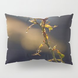 Early Mornig Rose Plant Pillow Sham
