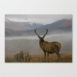 Highlands Stag Canvas Print