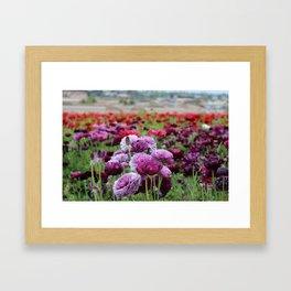 Ranunculus Field Framed Art Print