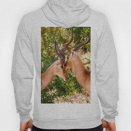 Gazelle (Color) Hoody