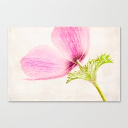 Linen In Pink Canvas Print