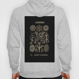 """Lichenes"" from ""Art Forms of Nature"" by Ernst Haeckel Hoody"