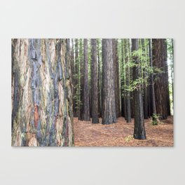 Forest Hues Canvas Print