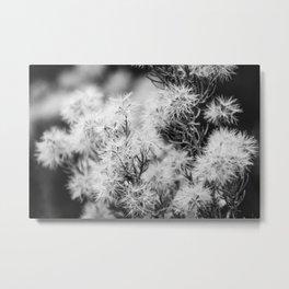 Black and White Desert Broom Metal Print