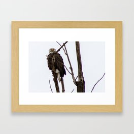 Kearney Eagle Framed Art Print