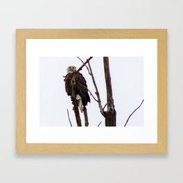 Kearney Eagle Framed Art Print