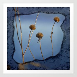 Seed Pods in Blue Frame Art Print