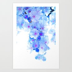 Cherry Blossom.Blue Art Print