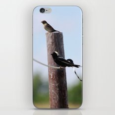 Bobolinks iPhone & iPod Skin