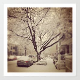 The winter tree in Brooklyn... Art Print