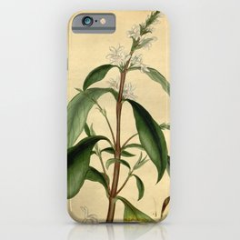 Flower justicia nitida Shining leaved Justicia iPhone Case